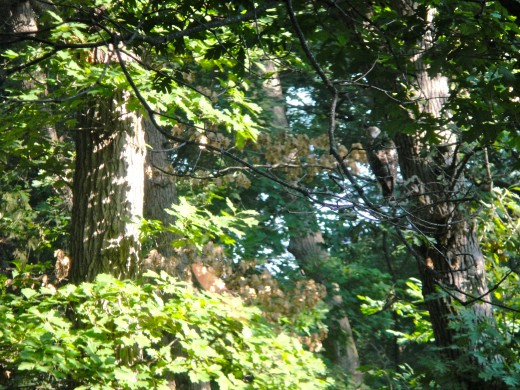 Urban forest are under constant human and ecological pressures thus constantly experience fast rate changes.