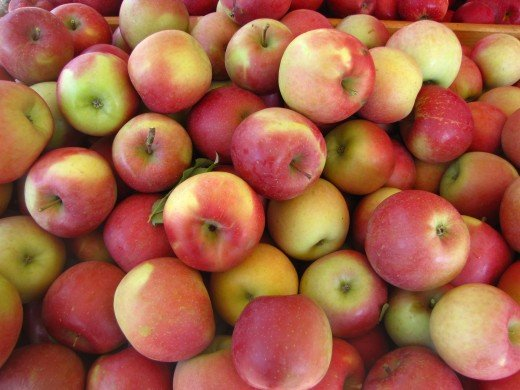 Here's another reason to buy Fuji apples:  They are large, dense, sweet and crisp and have a very long shelf life.