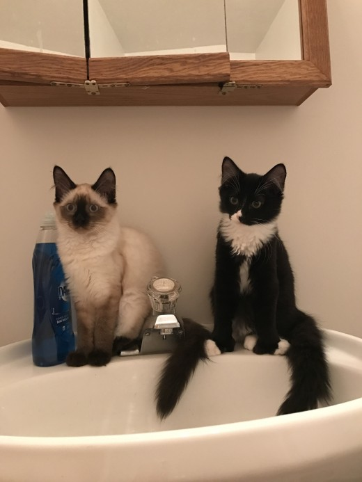 These two were our first fosters. They were with us for only 3 short days.