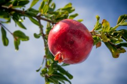 Pomegranate Fruit Juice Nutrition