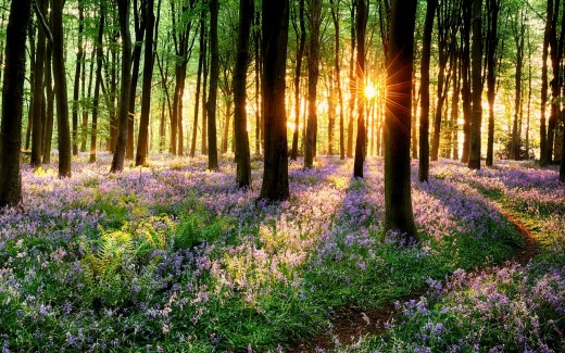 Spring forest flowers in full Bloom | Source