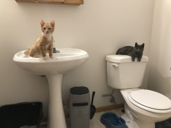 Creating a Safe Foster Kitten Room