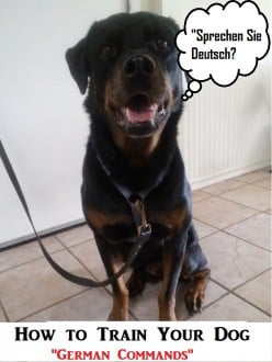 A Guide to Training a Dog German Commands