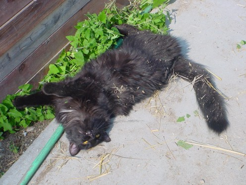 Spaz and his Catnip