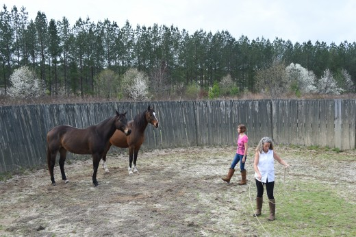 Barb & Kelly work with Trini and Marley during a session with Bruce Anderson.