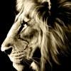 DomShadows profile image