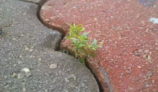 All It May Take Is a Tiny Crack in Our Hard Beliefs for a New Life to Sprout Out