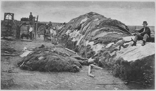 """Rath & Wright's buffalo hide yard in 1878, showing 40,000 buffalo hides, Dodge City, Kansas."""