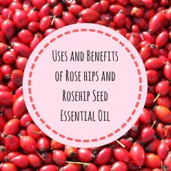 Uses and Benefits of Rose Hips and Rosehip Seed Essential Oil