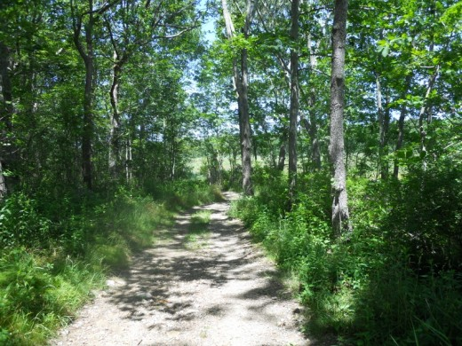 A Stoney Path at Barn Island
