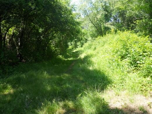A Grassy Path Barn Island