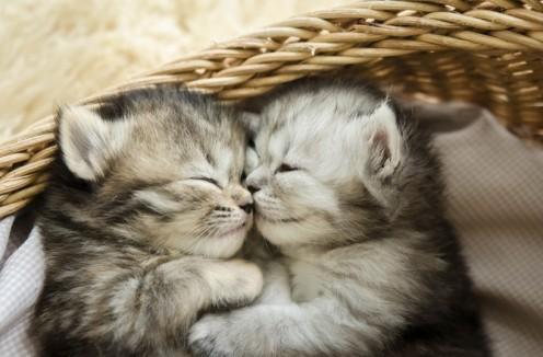Two newborns