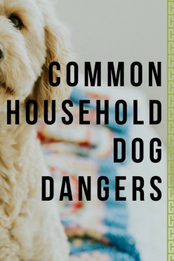 Common Household Items That Are Poisonous to Dogs