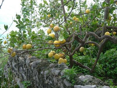Lemon groves abound, as well as Limoncello!