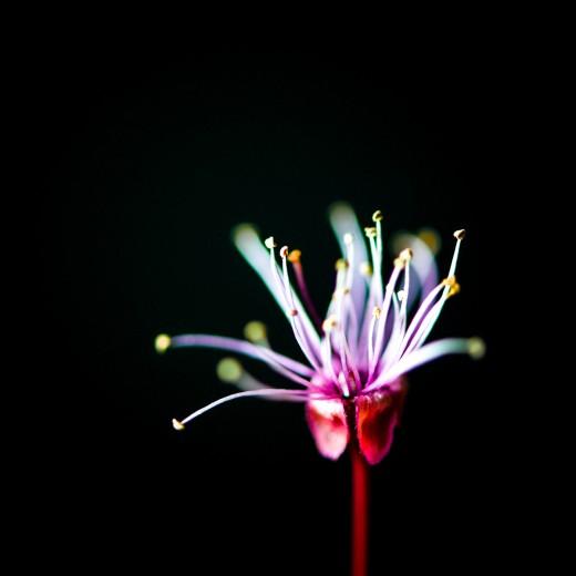 Flora Vasca by Evgeniy Luckmuss