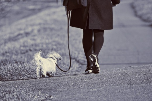 Taking your dog on a walk can double your pleasure when you see your dog enjoying the great outdoors and exercise as well.