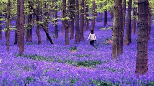 A List Of Fragrant Flowers Dengarden