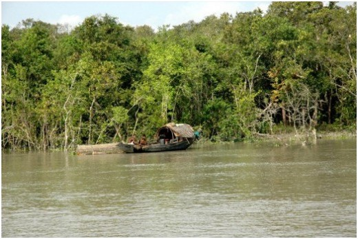 Fishing in Sundarbans