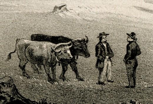 Oxen Team