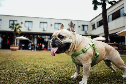 Once you've mastered these basic dog training commands, taking your dog out for the day will be a total walk in the park.