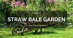 Create a Straw Bale Garden in Your Backyard