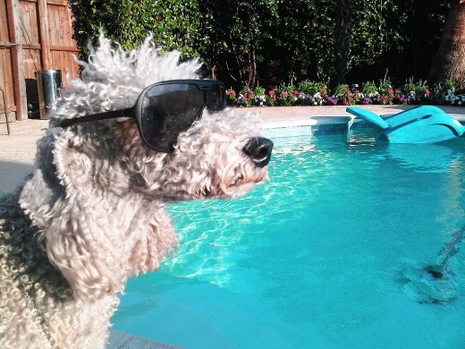 Don't forget about your pets in hot weather. They need to stay cool too.