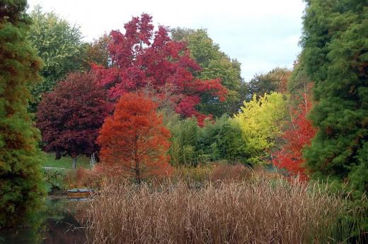 Autumn colors at Hillier Gardens, Hampshire, UK.