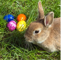Surprising Origins of the Easter Bunny