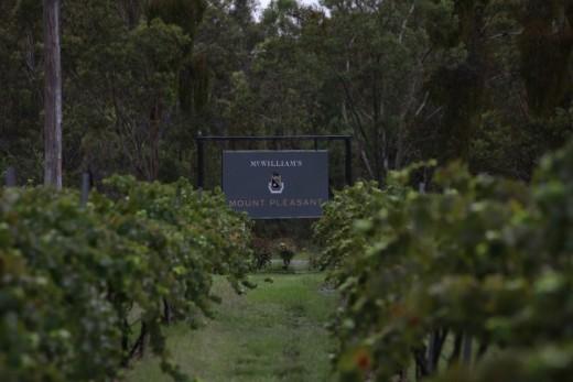 Mount Pleasant's Vineyard. Pokolbin, NSW.