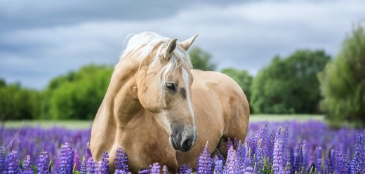Horse Adoption & Purchasing
