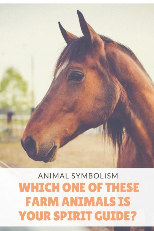 Farm Animal Symbolism Which One Is Your Spirit Guide Exemplore