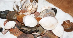 How to Polish Sea Shells