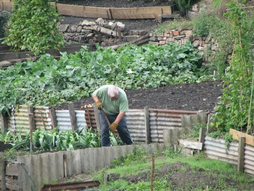 Manual labor for hours at a time is one step towards acquiring a successful garden. Fertilizing, disease protection, and agreeable weather from nature are the next three steps.