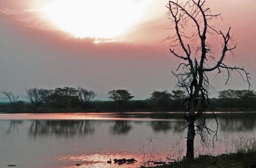 Mkhuze Sunset