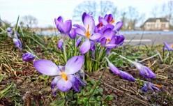 Saffron Supplement - Does It Suppress Your Appetite ?