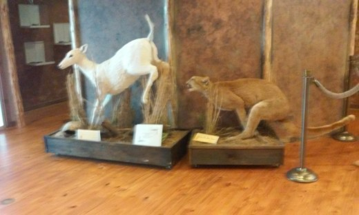 Wildlife Exhibit,, Alabama Delta Resource Center