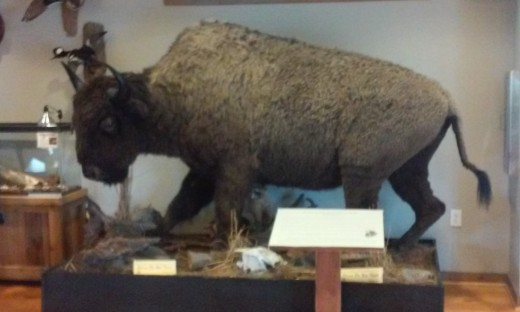 Wildlife Exhibit, Alabama Delta Resource Center