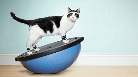 Exercise is an important part of staying healthy for all pets.