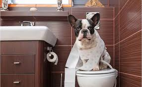 It takes plenty of patience when potty training your dog.  If only they could use the toilet like humans!