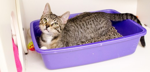 Finding the right litter box for your cat can be a tricky job, cats are very picky creatures.