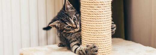 Buying a cat scratching stand can help save your furniture from your cat's sharp claws.