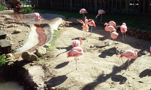 Flamingo Pavilion, Hattiesburg Zoo, Hattiesburg, MS