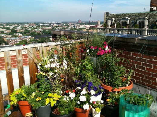 Container gardens save water and fit into corners and atop roofs.