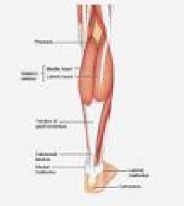 Courtesy of www.medical-look.com