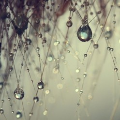 Love for the Rain
