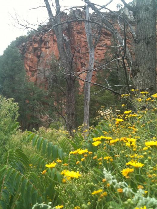 Oak Creek Canyon West Fork