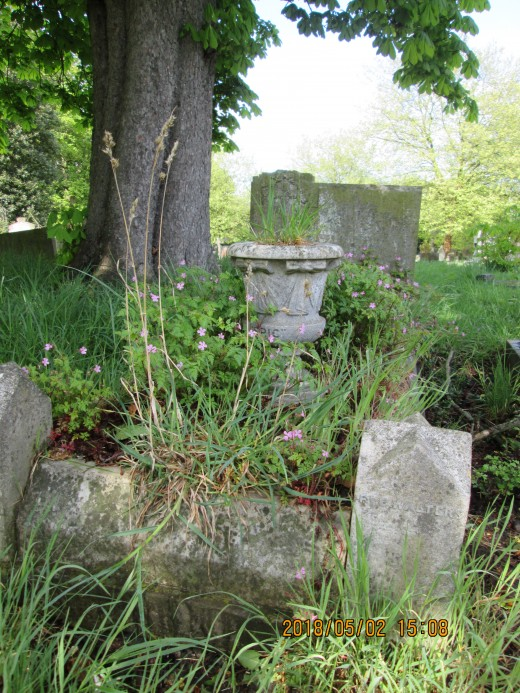 Our roots reach your branches... Forgotten memorials are taken over by attractive, if unwanted, flora that know no bounds
