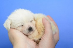 Man's Best Friend: How to Choose a Puppy