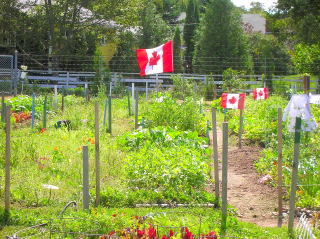 Saint John NB community garden, Bob Ewing photo