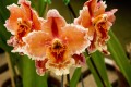 How to Pick and Care for an Orchid